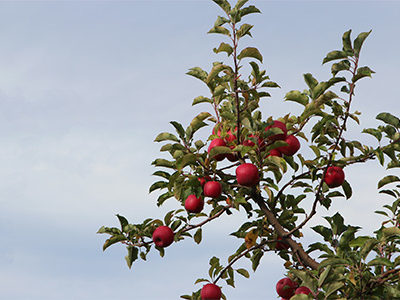 Apple Picking and Fall Fashion   For the Glitz